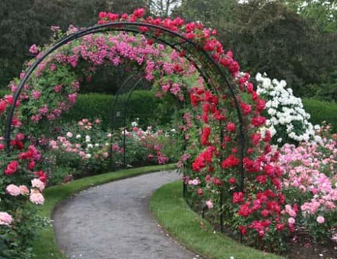 Украшаем сад - пергола в ландшафтном дизайне (фото)