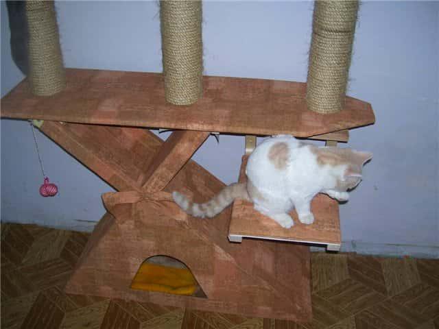 Простые игрушки для котят в домашних условиях 140