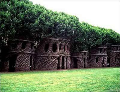 Искусство формирования деревьев (арбоскульптура) - оригинальный ладшафтный дизайн 78644