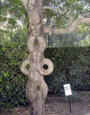 Искусство формирования деревьев (арбоскульптура) - оригинальный ладшафтный дизайн 64322
