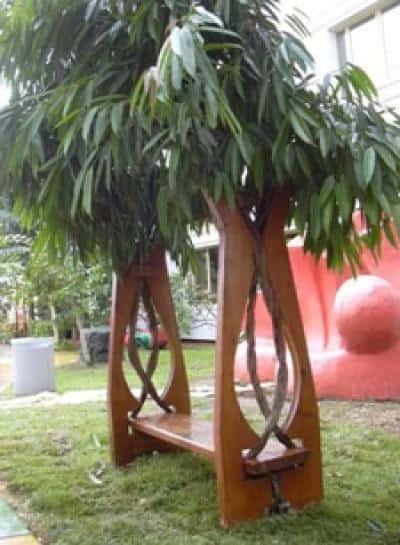 Искусство формирования деревьев (арбоскульптура) - оригинальный ладшафтный дизайн 36781
