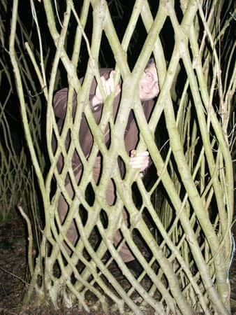 Искусство формирования деревьев (арбоскульптура) - оригинальный ладшафтный дизайн 11032