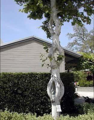 Искусство формирования деревьев (арбоскульптура) - оригинальный ладшафтный дизайн 59333