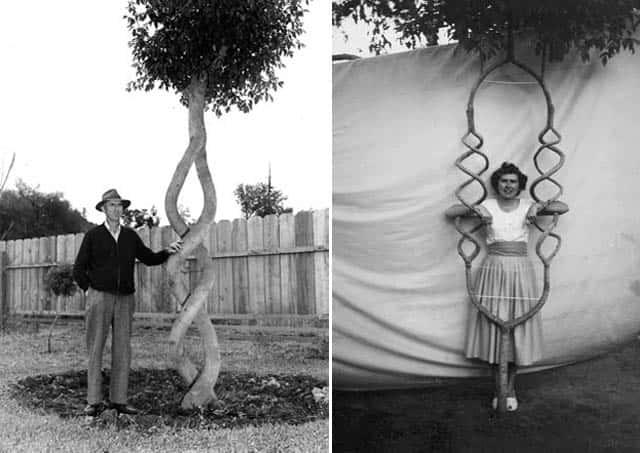 Искусство формирования деревьев (арбоскульптура) - оригинальный ладшафтный дизайн 20274