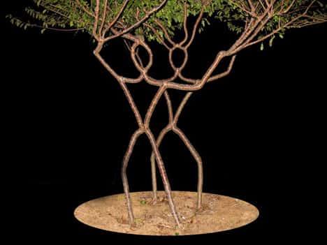 Искусство формирования деревьев (арбоскульптура) - оригинальный ладшафтный дизайн 42352