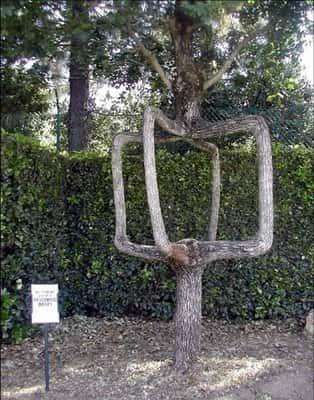 Искусство формирования деревьев (арбоскульптура) - оригинальный ладшафтный дизайн 54216