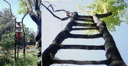 Искусство формирования деревьев (арбоскульптура) - оригинальный ладшафтный дизайн 66180