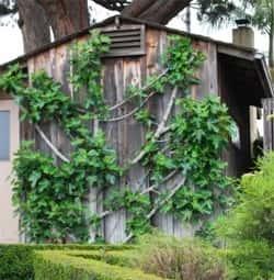Искусство формирования деревьев (арбоскульптура) - оригинальный ладшафтный дизайн 80167