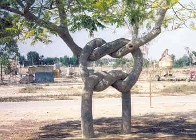 Искусство формирования деревьев (арбоскульптура) - оригинальный ладшафтный дизайн 92097
