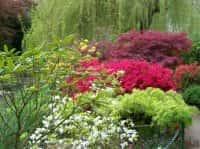 Декоративные кустарники для сада - красивое оформление ландшафта (фото 60951