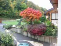 Декоративные кустарники для сада - красивое оформление ландшафта (фото 27426