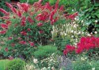 Декоративные кустарники для сада - красивое оформление ландшафта (фото 72287