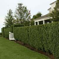 Декоративные кустарники для сада - красивое оформление ландшафта (фото 28247
