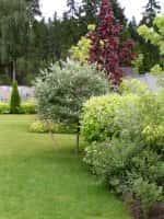 Декоративные кустарники для сада - красивое оформление ландшафта (фото 60977