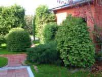 Декоративные кустарники для сада - красивое оформление ландшафта (фото 30144