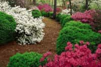 Декоративные кустарники для сада - красивое оформление ландшафта (фото 66184