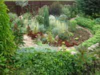 Декоративные кустарники для сада - красивое оформление ландшафта (фото 72211