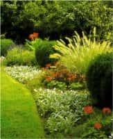 Декоративные кустарники для сада - красивое оформление ландшафта (фото 59514
