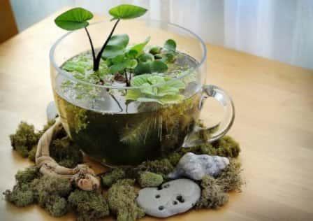 Творческий мини-сад в вашем доме