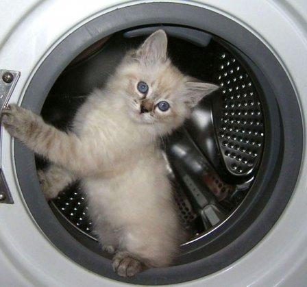Самостоятельное подключение стиральной и посудомоечной машины