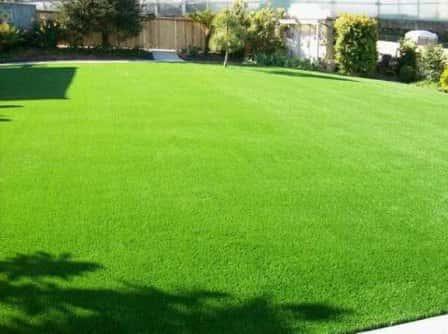 Что выбрать: рулонный газон или сеяный?