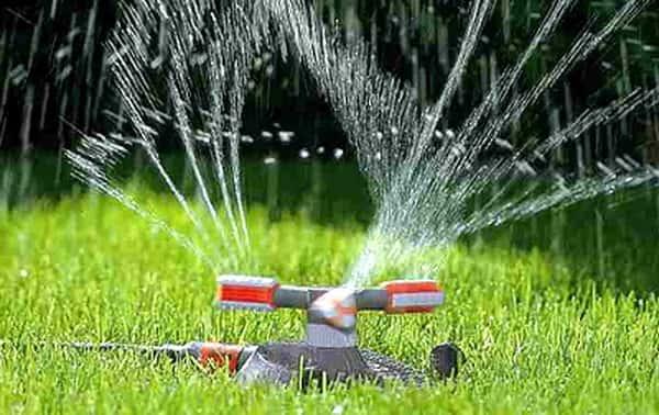 Как поливать газон - основные правила