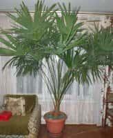 Комнатные растения отзывчивы на заботу и любовь