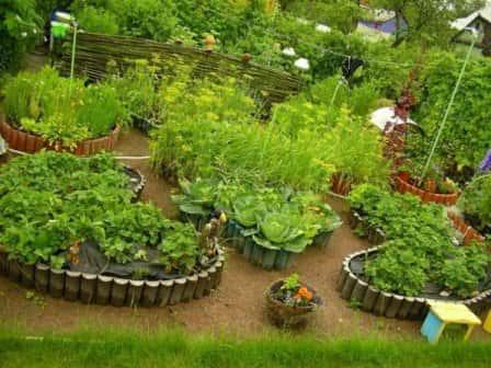 Декоративный огород (фото)