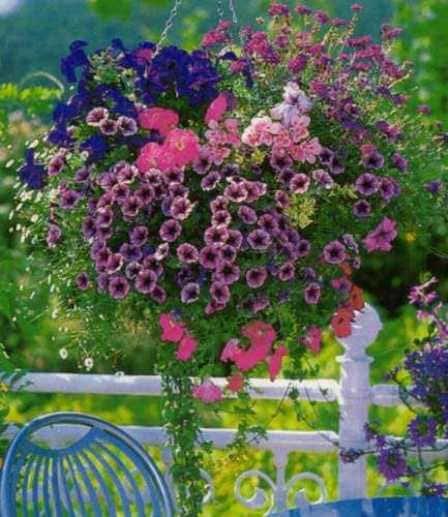 Вертикальное озеленение сада ампельными растениями
