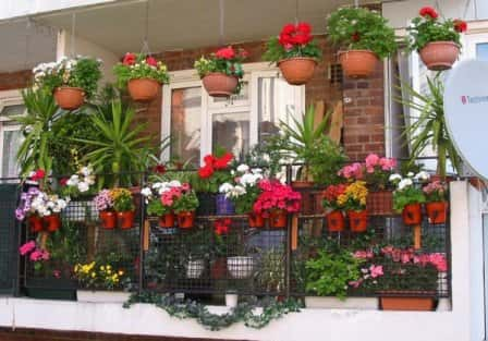 Правила подбора и размещения балконных растений