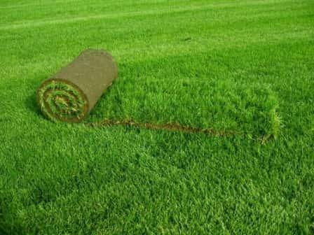Особенности укладки рулонного газона