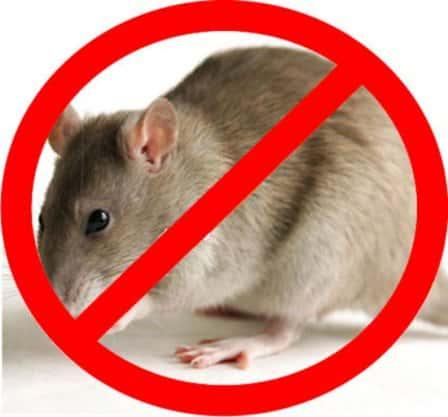 Мощная защита от крыс и мышей