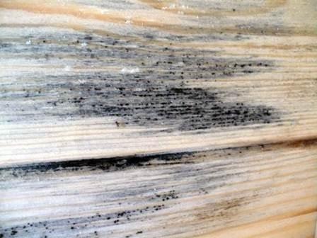 Причины, по которым чернеет и сереет древесина срубов, бревен, бруса, досок ...