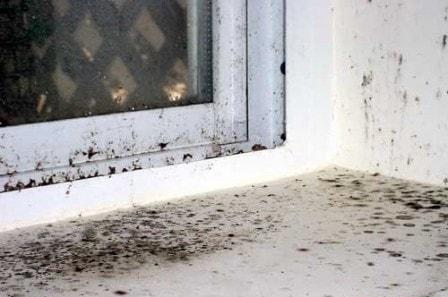 Борьба с грибком и плесенью в квартире