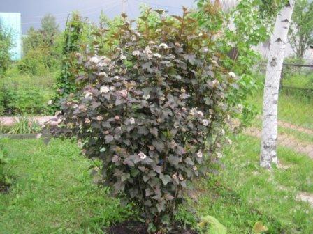 Способы расположения деревьев и кустарников на участке