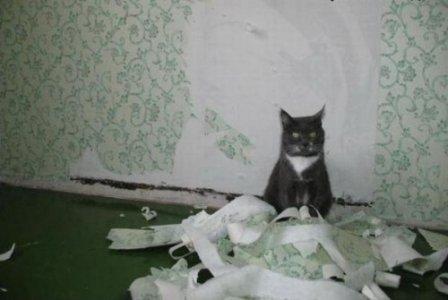 Что делать, если кот дерет обои?