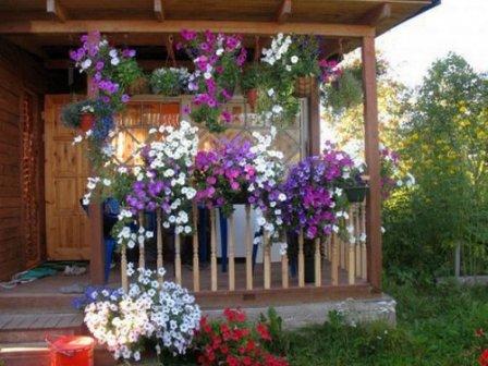 Использование ампельных растений в декоре участка