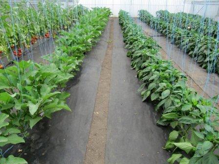 Агроволокно для богатого урожая