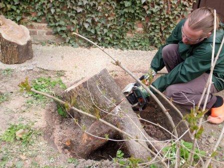 Как выкорчевать пень на садовом участке?