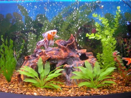 Как оставлять аквариум на время отпуска